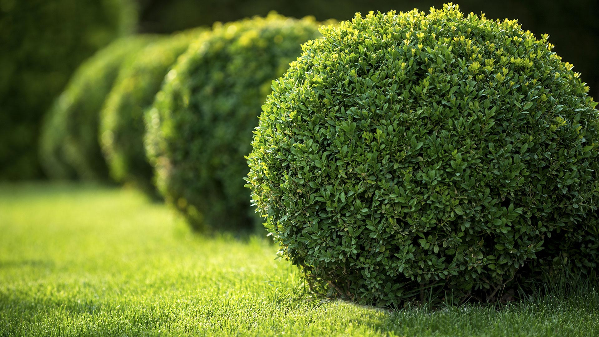 Da Vinci Landscape Design LLC Landscape Design, Pavers and Landscaping slide 1